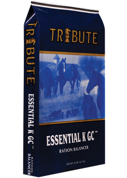 Tribute Essential K GC Plus image