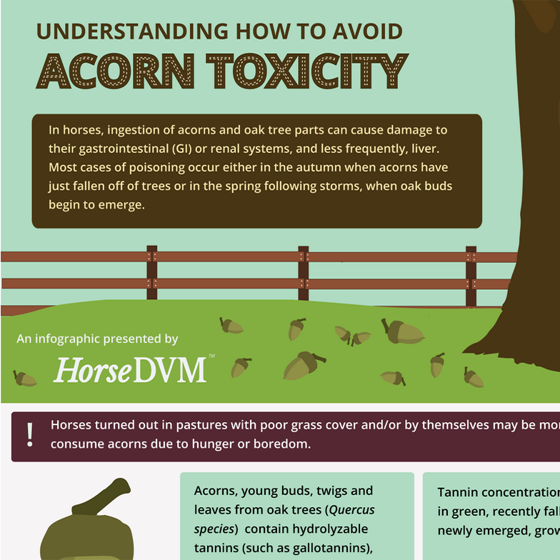 Understanding How to Avoid Acorn Toxicity in Horses