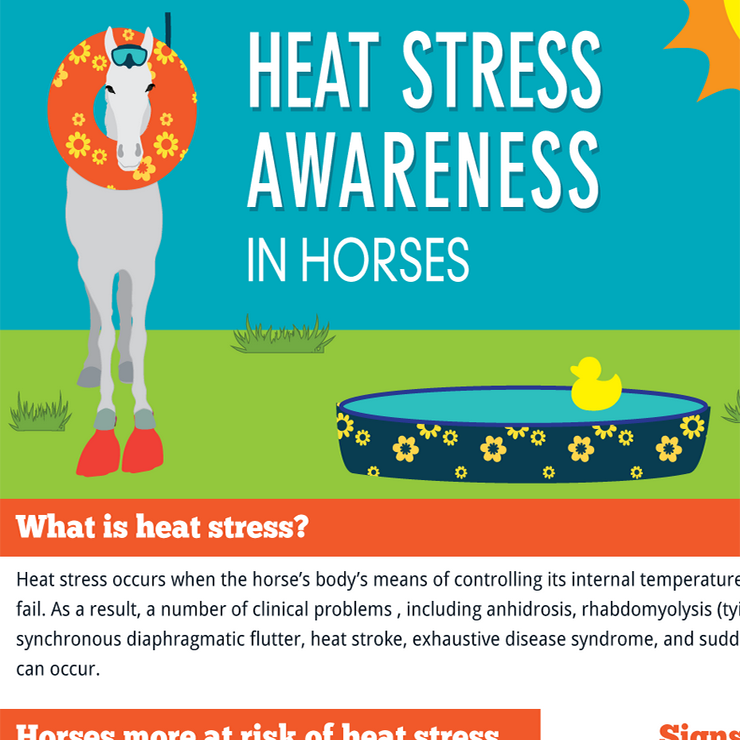 Heat Stress Awareness in Horses