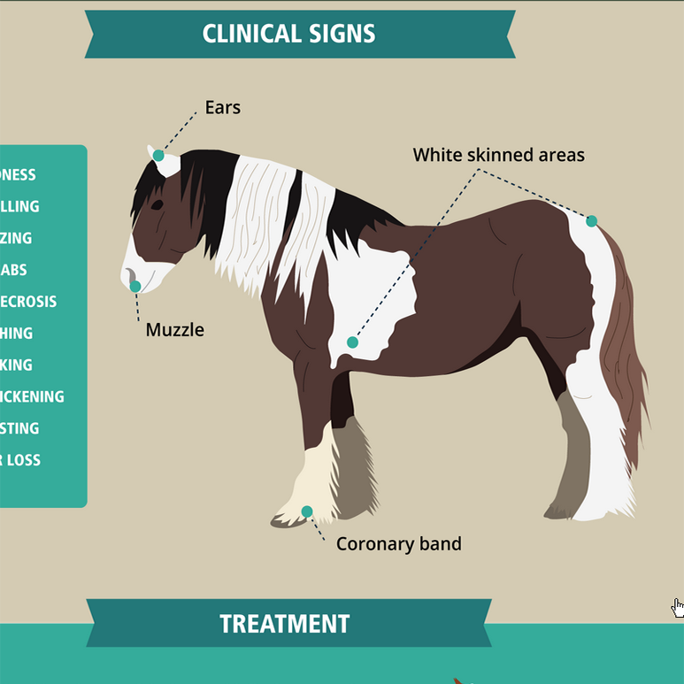 Understanding Photosensitivity in Horses